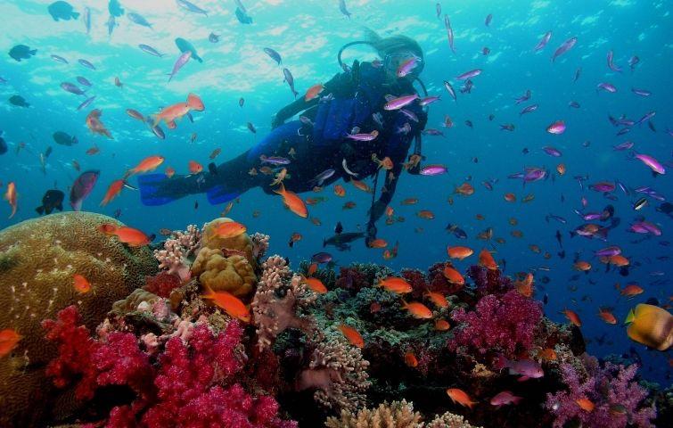 Arrecifes Los Roques