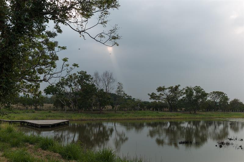 reserva natural mai po hong kong